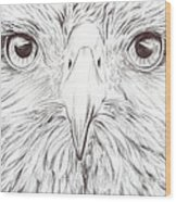 Animal Kingdom Series - Bird Of Prey Wood Print