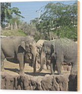 Animal Park - Busch Gardens Tampa - 01131 Wood Print