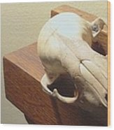 Animal Skull Mantel 2 12 2011 Wood Print