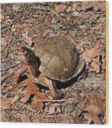 Animals 160 Wood Print