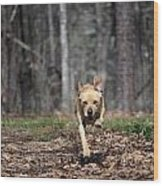 Animals 169 Wood Print