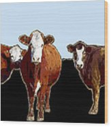 Animals Cows Three Pop Art With Blue Wood Print
