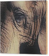Animals Wrinkle Too Wood Print