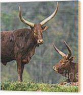 Ankole Longhorns Wood Print