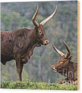 Ankole Longhorn 2 Wood Print