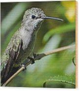 Anna Hummingbird Wood Print