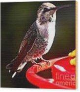 Anna's Hummingbird On Perch Wood Print