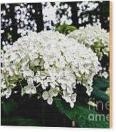Annabelle Hydrangea Blossoms Wood Print