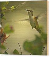 Rufus  Humming Bird  Wood Print