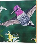Anna's Hummingbird Wood Print