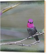 Anna's Hummingbird - Male Wood Print