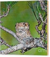 Annas Hummingbird Nest Wood Print
