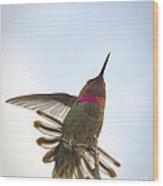 Anna's Hummingbird Wood Print