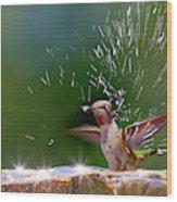 Anna's Hummingbird Taking A Shower Wood Print