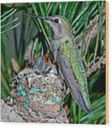 Annas Hummingbird With Young Wood Print