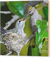 Annas Hummingbirds At Nest Wood Print