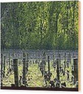 Anne Amie Vineyard 23126 Wood Print