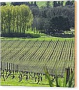 Anne Amie Vineyard Lines 23093 Wood Print