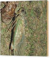 Annual Cicada Wood Print