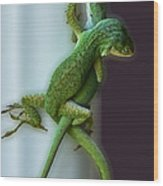 Anole Lovers Wood Print