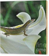 Anole On A White Lily Wood Print