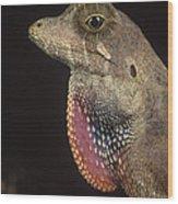 Anolis Lizard Portrait Peru Wood Print