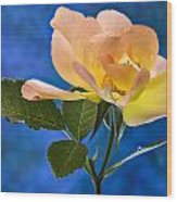 Another Beautiful Rose Wood Print