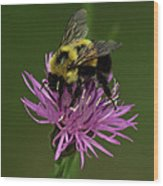 Another Bee? Wood Print