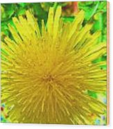 Another Variety Dandelion Wood Print