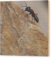 Ant Macro Wood Print