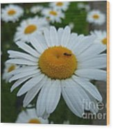 Ant Nothing Sweeter Than My Little Daisy Wood Print