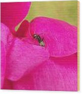 Ant On Pink Wood Print