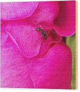 Ant On Pink Petals Wood Print