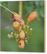 Ant On Plant Wood Print