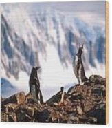 Antarctic Gentoo Penguins Wood Print