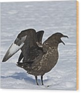 Antarctic Predator.. Wood Print