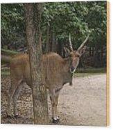 Antelope Behind A Tree Wood Print