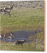 Antelope   Duck   And Coyote Wood Print