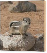 Antelope Ground Squirrel Wood Print