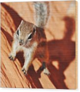 Antelope Ground Squirrel Wood Print