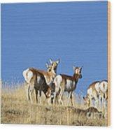 Antelope Herd   #0296 Wood Print
