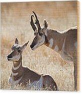 Antelope Love Wood Print
