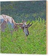 Antelope Near Wildlife Loop Road In Custer State Park-south Dakota- Wood Print