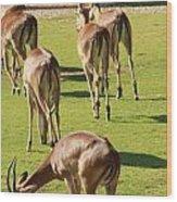 Antelopes Wood Print