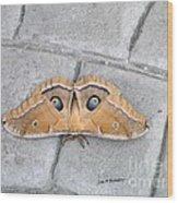 Antheraea Polyphemus Wood Print