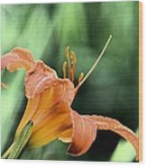 Anthers Aglow Wood Print