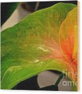 Anthurium In Red And Green Wood Print