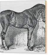 Antique Horse Drawing Wood Print