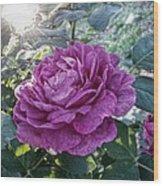 Antique Rose Wood Print