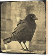 Antique Sepia Crow Wood Print